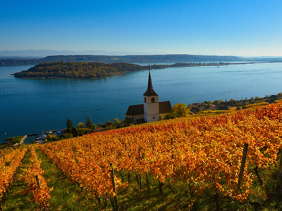 A traditional vineyard in Switzerland