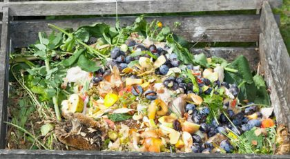 Compost from kitchen waste