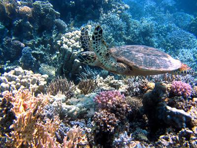 Biodiverse habitat of coral reefs