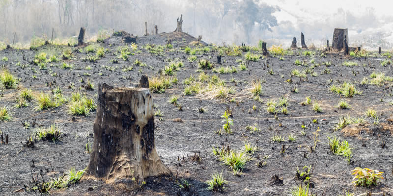 causes of deforestation in madagascar greentumble