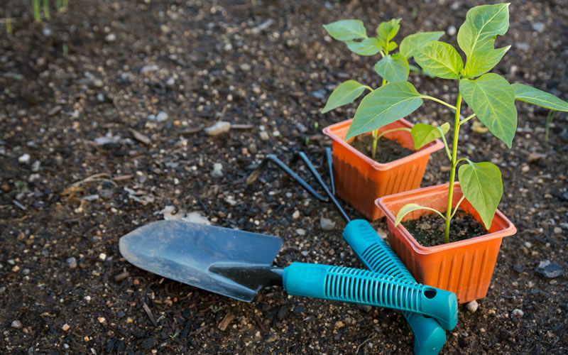 Things to know before starting a garden