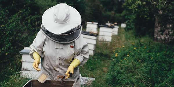 Beekeeper working on a beehive maintenance