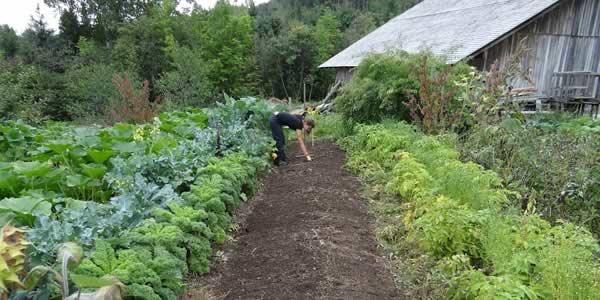 Polyculture crops