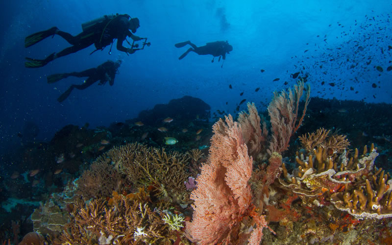 How Does Tourism Affect Coral Reefs