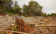 Amazon rainforest deforestation facts