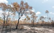 How Deforestation Affects Climate Change