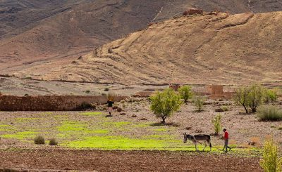 Impacts of Climate Change on Agriculture in Developing Countries