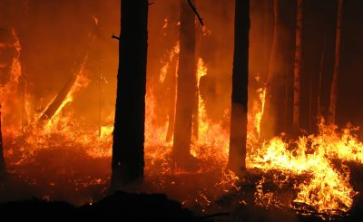 How Do Forest Fires Start