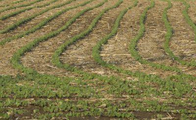No-Tillage Farming