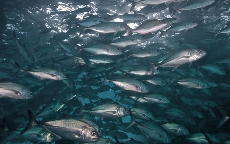 Long-Term Effects of Overfishing