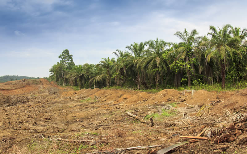 Palm Oil and Environment