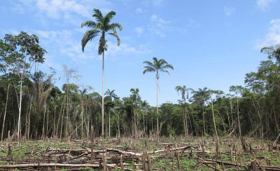 The Alarming Truth Behind Deforestation