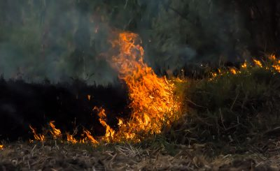 The Ecological Importance of Forest Fires