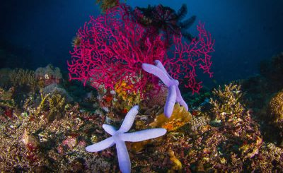 Things You Can Do to Protect Coral Reef
