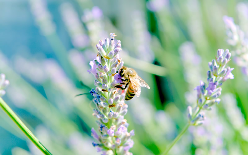 Why Declining Bee Populations Are a Threat to Global Health