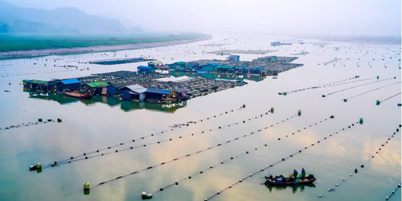 Effect of fish farming on environment