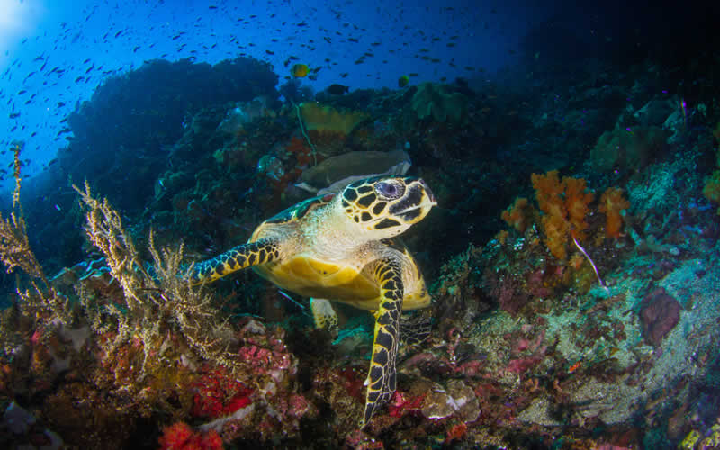 Endagered sea turtle