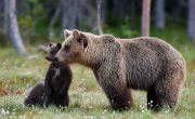 The Importance of Wild Animals in Human Life