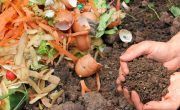 Tips How to Use Compost Effectively