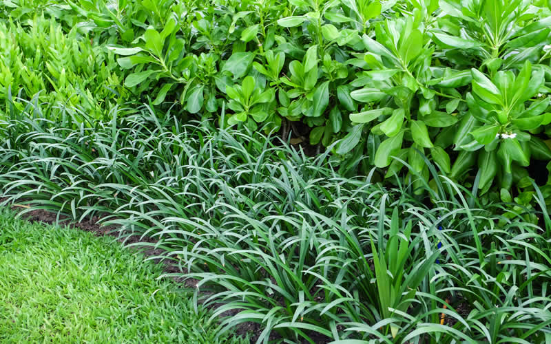 Benefits of rain gardens