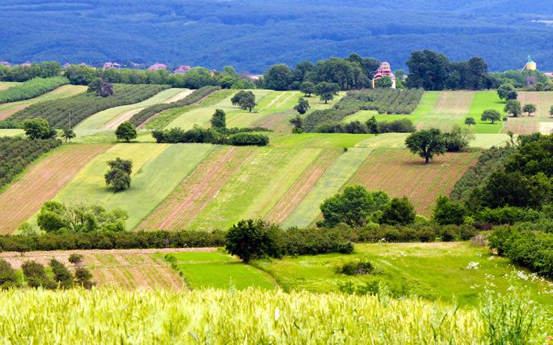 Crop Biodiversity