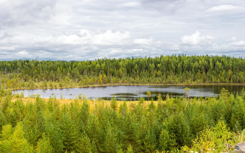 Facts About the Boreal Forest