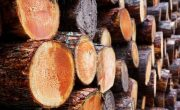 How Can You Help to Stop Illegal Logging