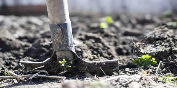 Preparing soil for sowing
