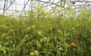 Advantages and Disadvantages of Intensive Vegetable Farming