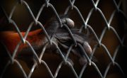 Should we treat illegal wildlife trade as a serious crime