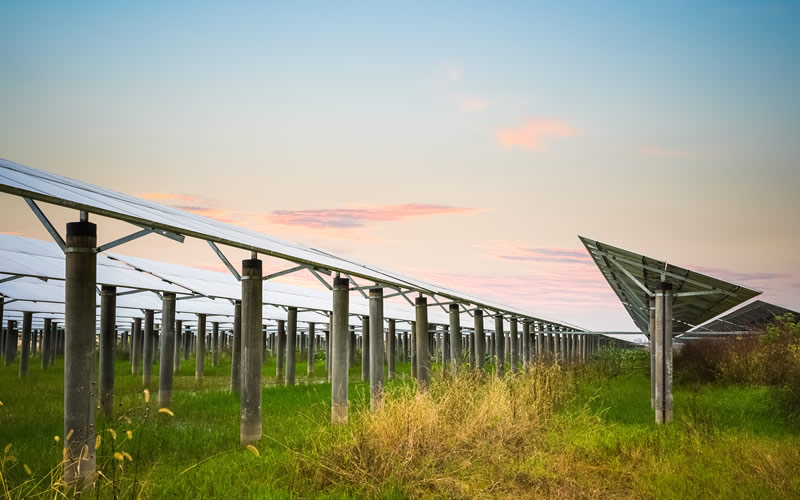 Solar farms help increase biodiversity