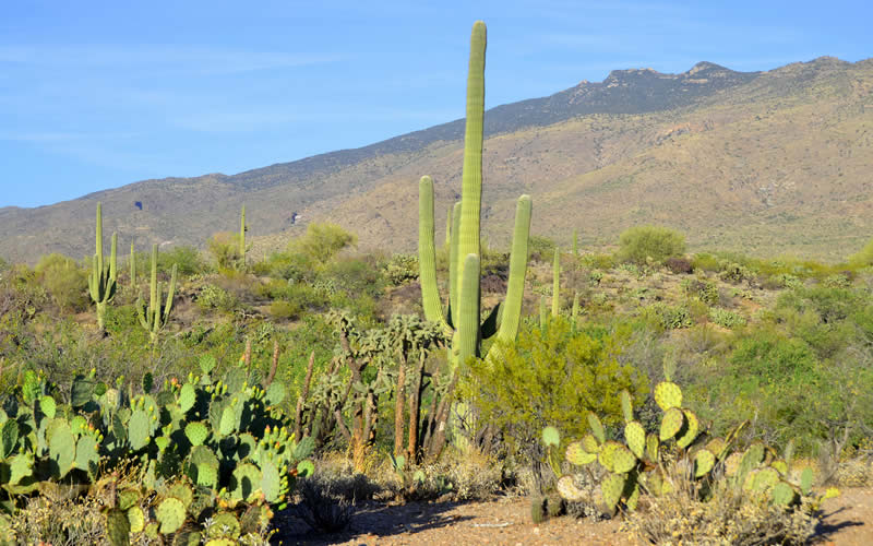 endangered cactus species
