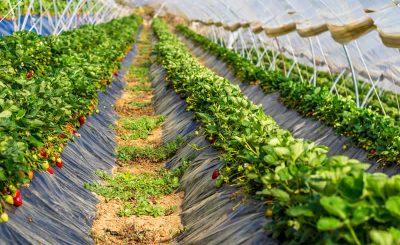 Advantages and Disadvantages of Intensive Fruit Farming