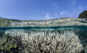 How to prevent ocean acidification