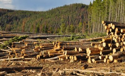 Strategies to reduce deforestation