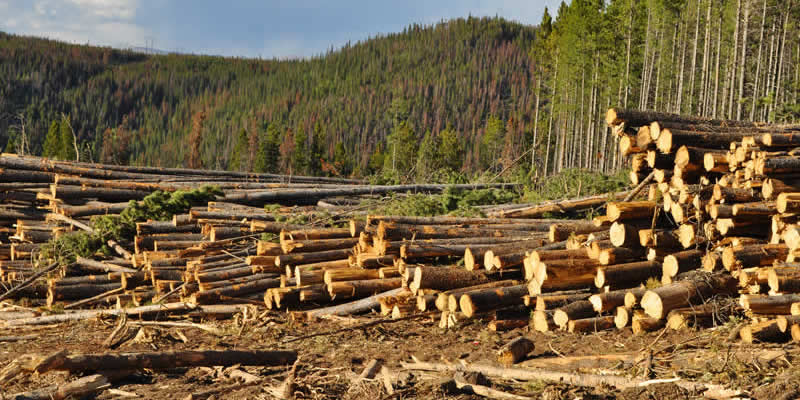 Strategies to reduce deforestation