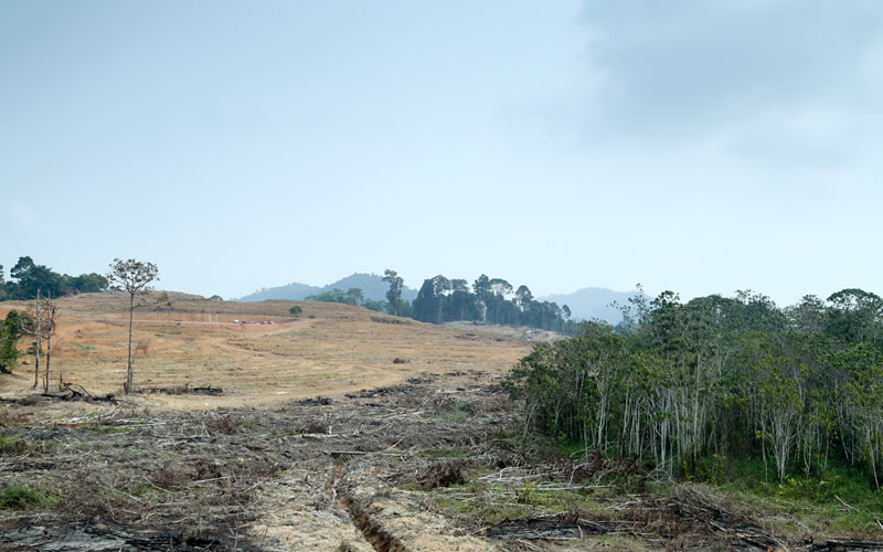 The Worst Cases of Habitat Destruction