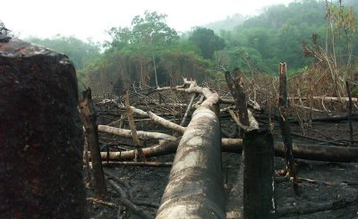 The problem of illegal logging in Philippines