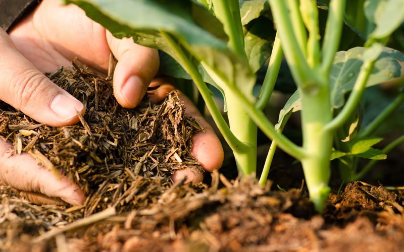 What role does humus play in soil fertility