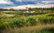 Astonishing facts about wetlands