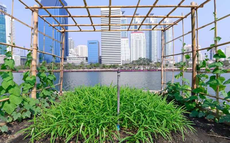What is urban agriculture