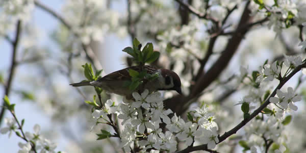 Bird hunting for pests on apple tree