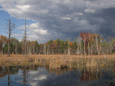 Beautiful wetland landscape in the fall