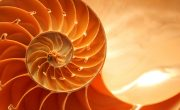 Is biomimicry an answer to our environmental problem