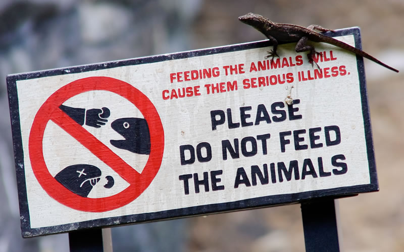 Why you should not feed wildlife