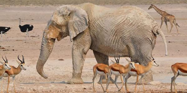 The Etosha National Park