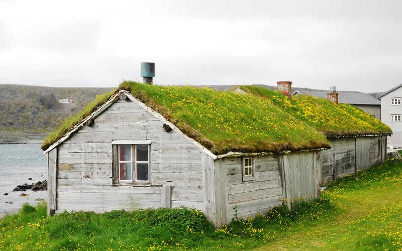 How do green roofs work