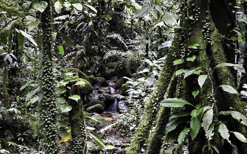 Biodiversity hotspots of the world