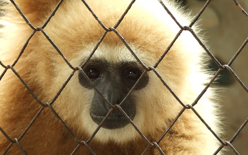 Brief facts about illegal pet trade