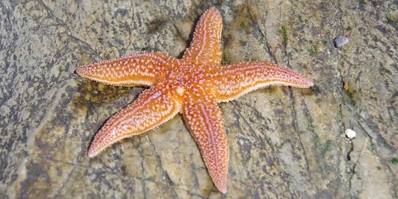 12 Examples of Keystone Species | Greentumble